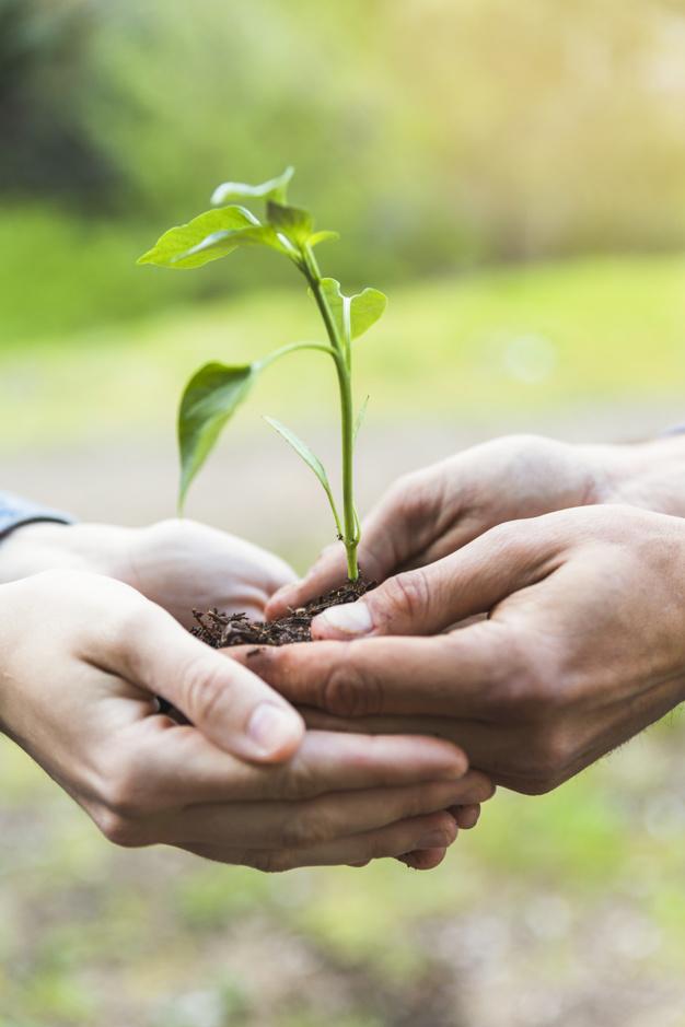crop-hands-holding-sapling_23-2147826193