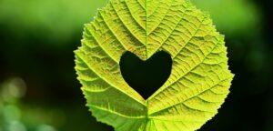 leaf-2447433_1920